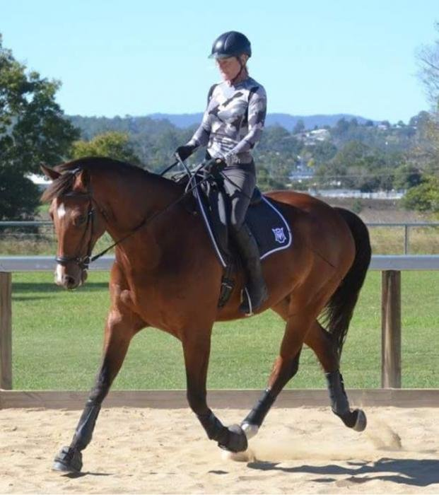 Outstanding Warmblood Unlimited Potential