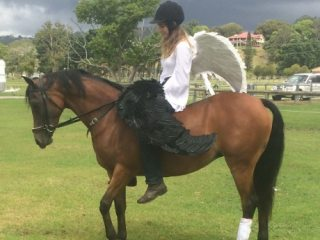 Arabian Riding Pony in New South Wales