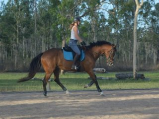 Thoroughbred in Queensland