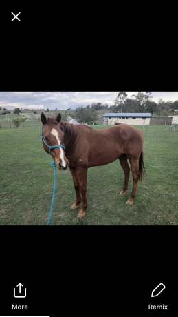 All Rounders - Thoroughbred in New South Wales