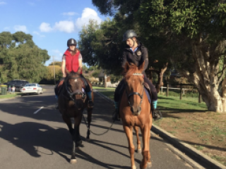 All Rounders - Thoroughbred in Victoria