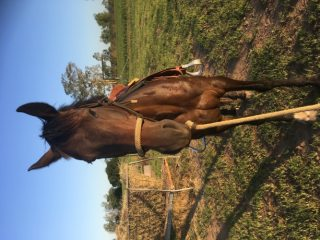 Polo & Polocrosse in Queensland