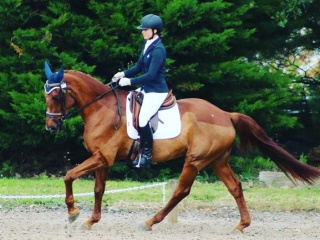 Schoolmaster! Ideal young riders mount