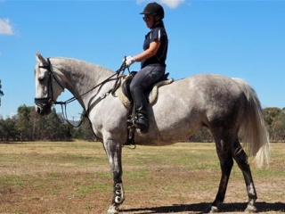 Lovely No Fuss Sportaloosa Mare