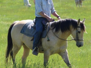 Buckskin mare under saddle