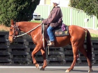 Super Quiet Pure QH Gelding +VIDEO+
