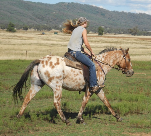 Appaloosa in New South Wales