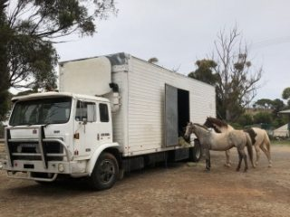 Truck ideal for conversion to horse transport