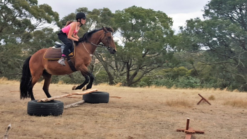 Confidence Builder 14.1hh Mare
