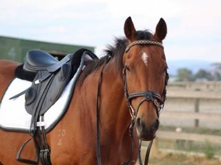 Rove (Stroke of Luck) 16.1hh