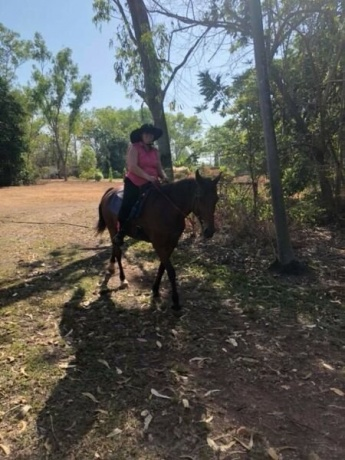 Horses in Northern Territory