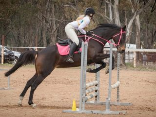 Eventers - Thoroughbred in South Australia