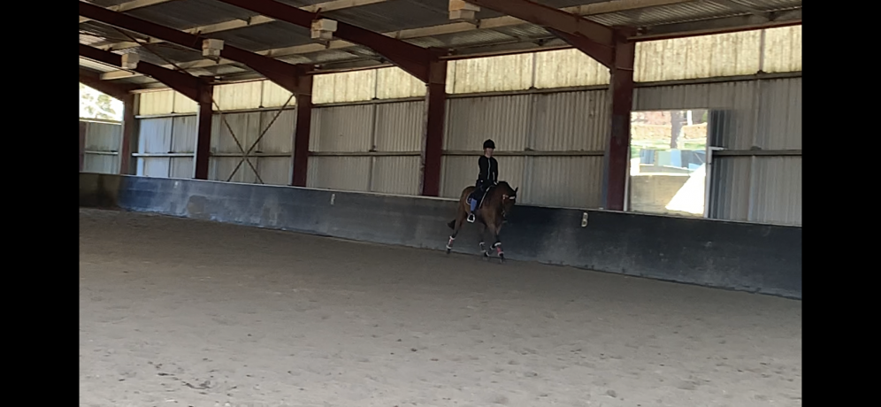 Riding Pony in New South Wales