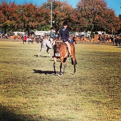 Show Pony in New South Wales