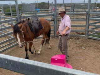 All Rounders - Clydesdale in New South Wales