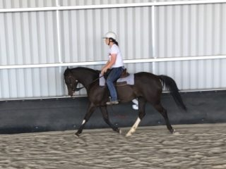 Stock Horse X Paint Mare