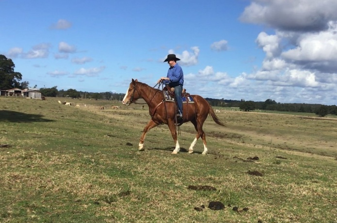 Quarter Horses in New South Wales