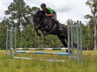 """Grande Slam"" Beautiful 16hh 4yo Black Gelding"
