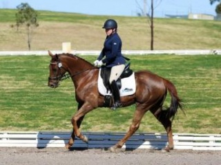 Dressage or Show Ring Star