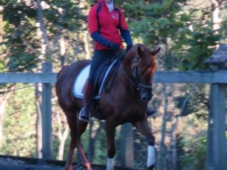 Beautiful Mare - Eventing and show potential