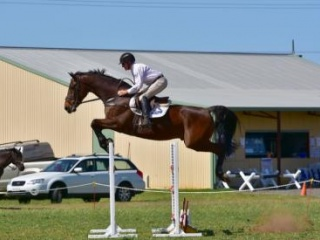 1.30 Jumper and 2* Eventer