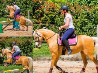 Unicorn all rounder pony for part Lease
