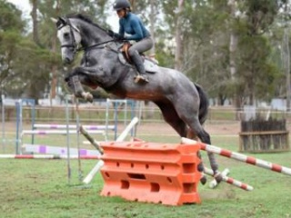 Talented young horse