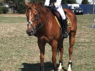 Super, talented pony club all rounder