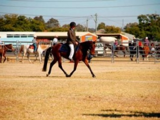 Registered ASH Mare. Breed or Ride