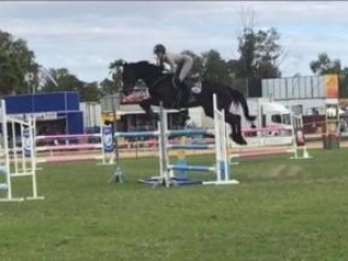 Showjumping / Eventing Mare $$ONO