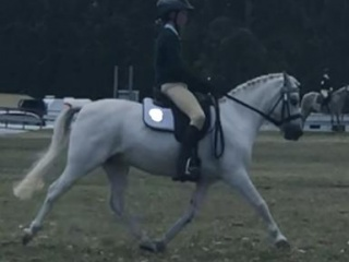 'One Of A Kind', Allrounder Super Star Pony