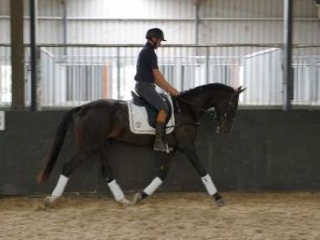 Execeptional Young Dressage Horse