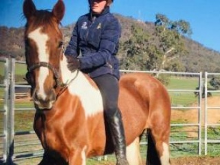 Lovely Clydie x Thoroughbred Allrounder