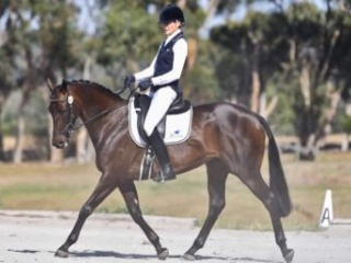 Talented competitive young horse