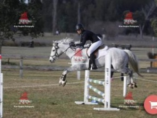 Grey 15.2h Eventer, Suitable for experience rider