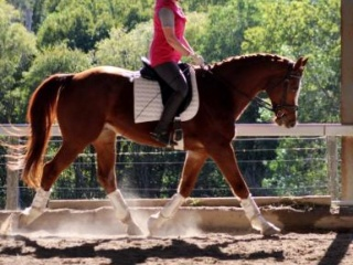 Cute Dressage Mount - price reduced to meet market