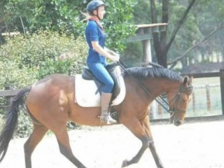 Sweet Mare never raced