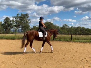 Reduced!! Potential- Eventing, dressage or jumping