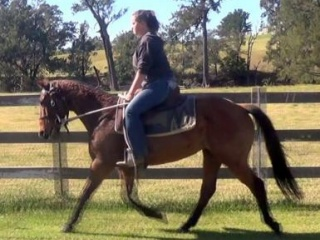 Champion Team Penner Bay QH Mare + VIDEO+