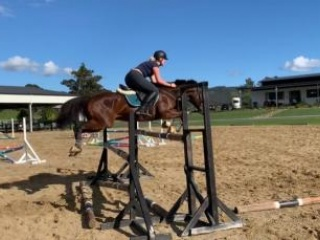 Allrounder - showjumping mount