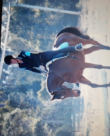 Wanted to buy allrounder suitable for pleasure riding, pony club, showing. NO VICES, NO TB, NO STANDIES. Please