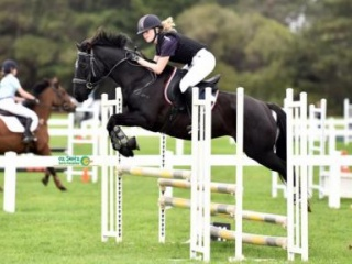 Sporty all rounder jumping pony