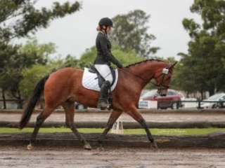 Fun mare for confident teen rider