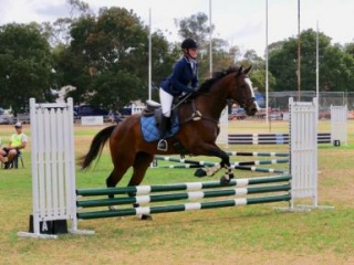 Unlimited potential 6 yr old gelding