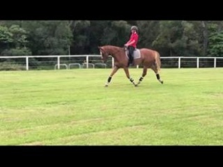 Uncomplicated young performance gelding