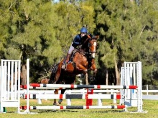Young Showjumping Mare by Cocaine Ego Z