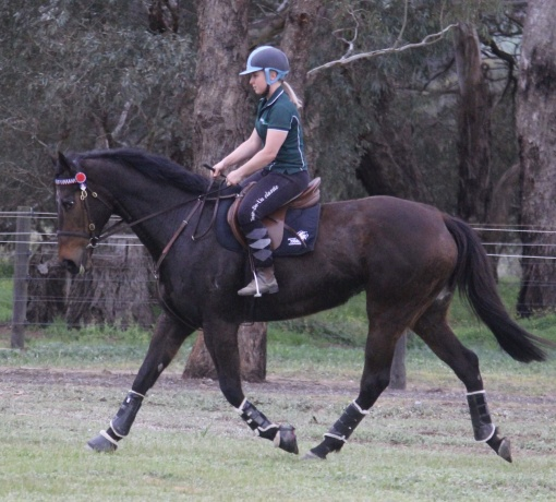 Thoroughbred in Victoria