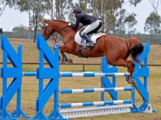 Stunning Riding horse and Broodmare
