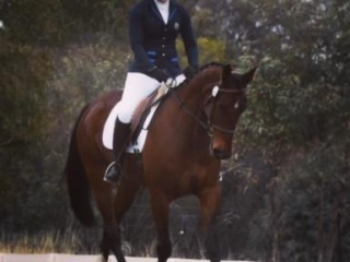 Promising upcoming eventer/jumper