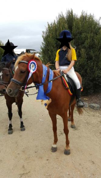 Honest Competitive Allrounder Pony